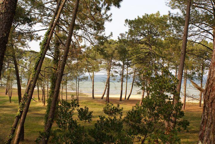La cabane au bord du lac chambre avec jacuzzi - La cabane au bord du lac ...